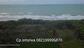 Kampung Kurma Sultan Saladin Pesona Keindahan Pinggir Pantai