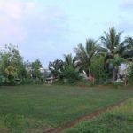 Kampung Kurma Menawarkan Tanah Murah di Bogor