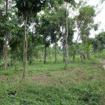 Segera Mulai Investasi Tanah Di Jonggol