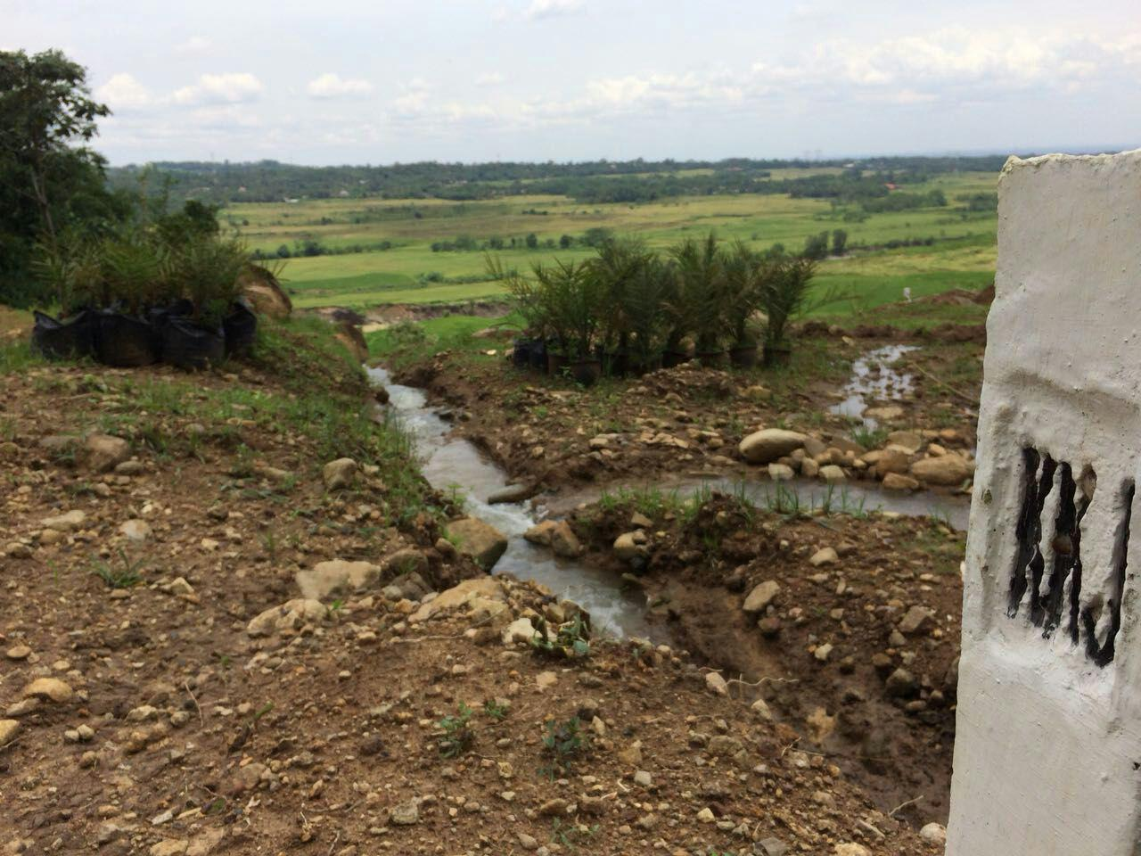 Mengintip Indahnya Kampung Kurma Sukaresmi dan Menepis Isu Penipuan Yang Beredar
