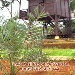 Kampung Kurma Tanjungsari Memberikan Keuntungan Berinvestasi Bagi Anda